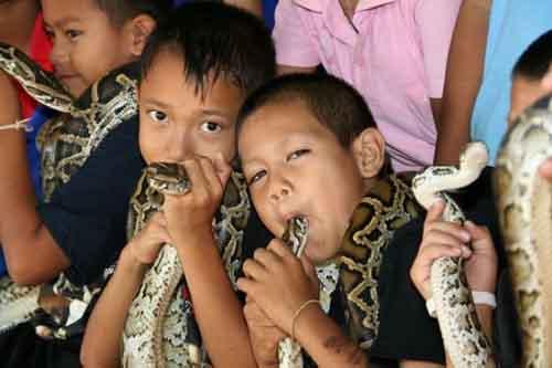 """Ngôi làng người và rắn là """"bạn thân"""" - 2"""