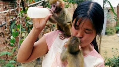 TQ: Chồng huấn luyện khỉ, vợ cho khỉ… bú - 1