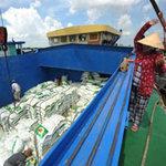 Thị trường - Tiêu dùng - Xuất khẩu gạo lại thêm rào cản mới