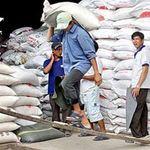 Thị trường - Tiêu dùng - Xuất khẩu gạo Việt Nam phá kỷ lục 2011