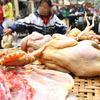 Tác hại khôn lường khi ăn gà tồn dư kháng sinh