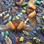 Phi thường - kỳ quặc - Tranh từ xác côn trùng gây tranh cãi