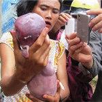 Phi thường - kỳ quặc - 10 sinh vật lạ phát hiện tại Việt Nam 2012