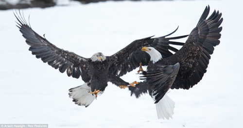 Chùm ảnh: Đại bàng quyết chiến trên không - 5