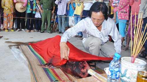 Bạc Liêu: Phát hiện cá voi chết vì mắc cạn - 1