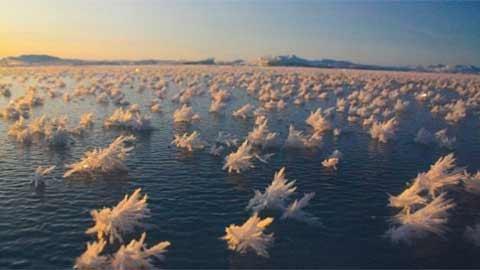 Ngắm hàng nghìn bông hoa băng ở Bắc Cực - 2