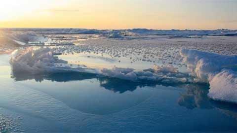Ngắm hàng nghìn bông hoa băng ở Bắc Cực - 3