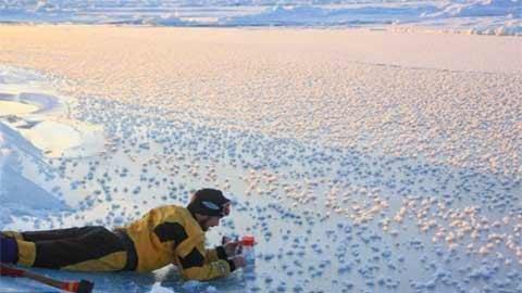 Ngắm hàng nghìn bông hoa băng ở Bắc Cực - 4