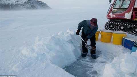 Ngắm hàng nghìn bông hoa băng ở Bắc Cực - 6