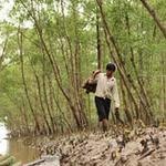 Thị trường - Tiêu dùng - Nuôi trồng thủy sản cũng phải đóng phí