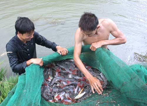 Nuôi trồng thủy sản: Nỗi lo chồng chất - 1