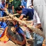 Tin tức trong ngày - Bạc Liêu: 3 ngày, 4 cá voi gặp nạn