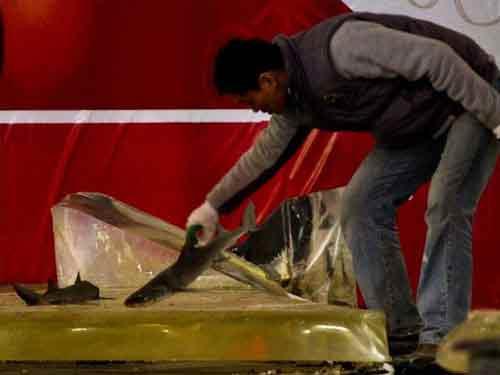 TQ: Nổ bể cá mập khổng lồ, 15 người bị thương - 3