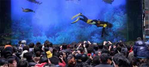 TQ: Nổ bể cá mập khổng lồ, 15 người bị thương - 6