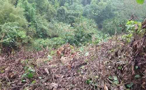 Cán bộ phá rừng để... trồng rừng? - 1