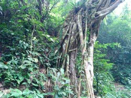 Cán bộ phá rừng để... trồng rừng? - 2