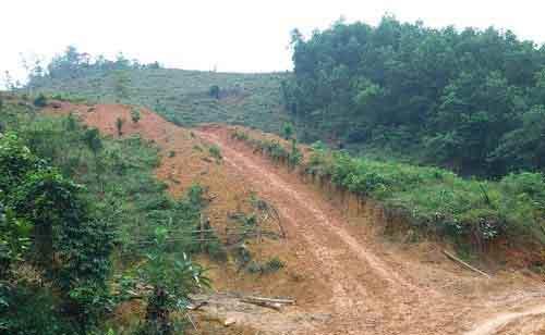 Cán bộ phá rừng để... trồng rừng? - 3