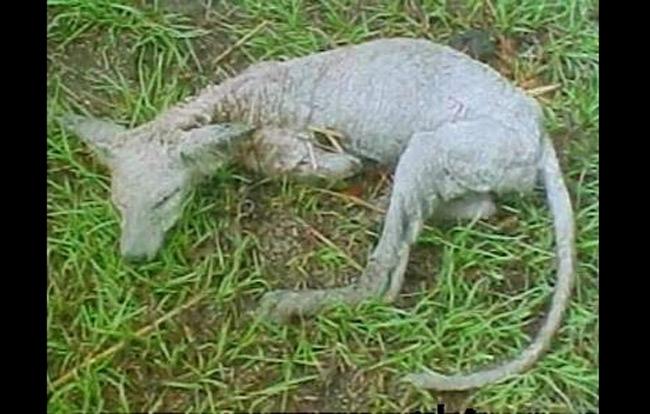 Vào tháng 8, con thú Chupacabra được cho là đã tái xuất tại Ukraine. Nó chính là quái vật hút máu có màu xám, răn nanh và một cái cổ hơi dài, chân trước ngắn hơn chân sau, hơi giống kangaroo, đồng thời có những nét tương đồng với chó và cáo.