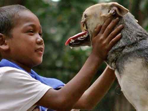 Philippines: Cứu 2 cô chủ, chú chó mất hàm - 1