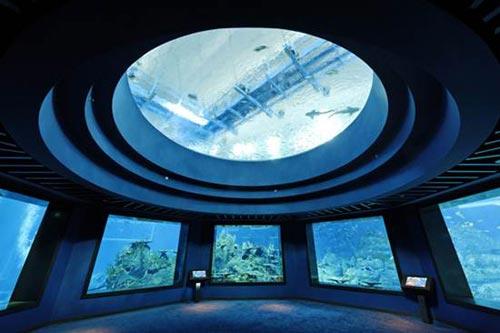 Thủy cung lớn nhất thế giới ở Singapore - 1