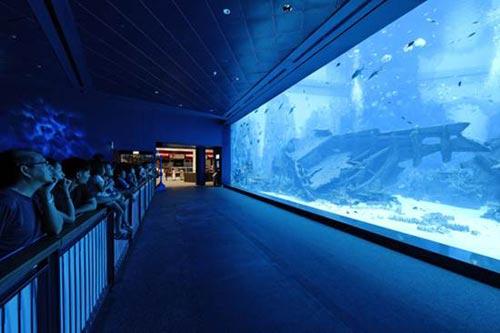 Thủy cung lớn nhất thế giới ở Singapore - 6