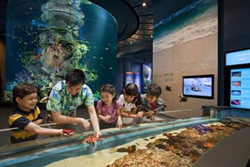 Thủy cung lớn nhất thế giới ở Singapore - 8