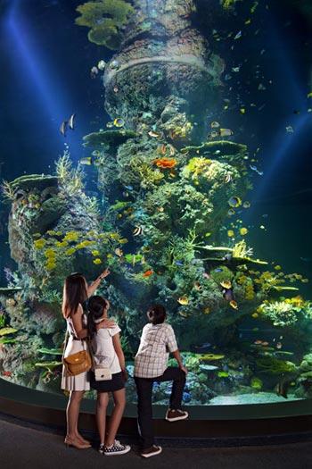 Thủy cung lớn nhất thế giới ở Singapore - 9