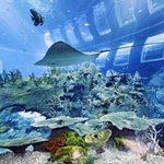 Du lịch - Thủy cung lớn nhất thế giới ở Singapore