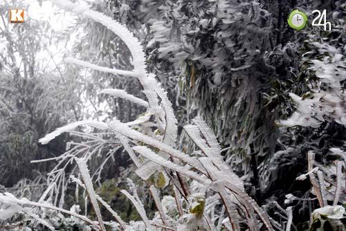 Băng tuyết phủ trắng Sa Pa ngày cuối năm - 9