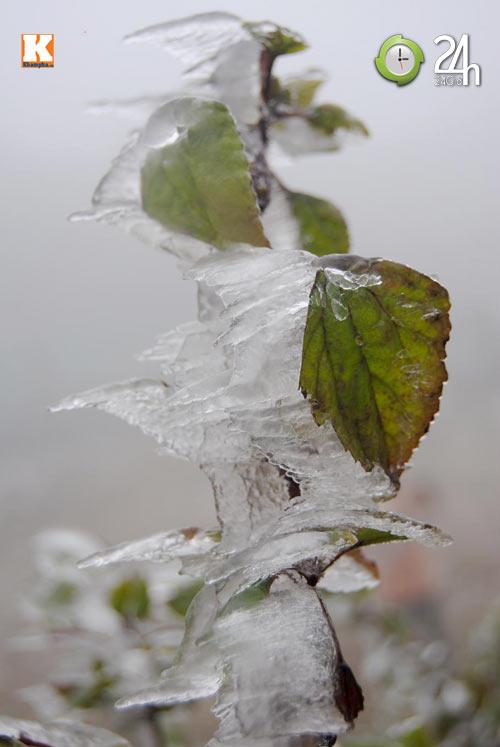 Băng tuyết phủ trắng Sa Pa ngày cuối năm - 10