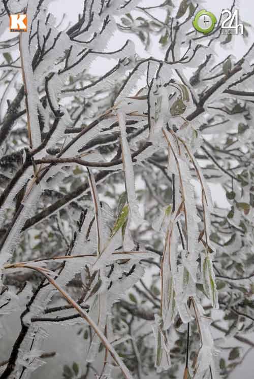 Băng tuyết phủ trắng Sa Pa ngày cuối năm - 5