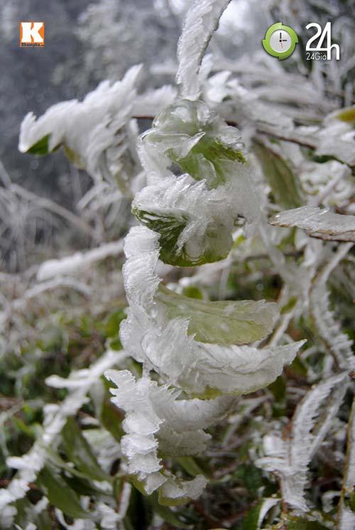 Băng tuyết phủ trắng Sa Pa ngày cuối năm - 8