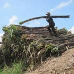 Thị trường - Tiêu dùng - Nhà máy đường đối mặt nguy cơ phá sản