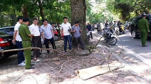 Một phụ nữ tử vong vì cành cây rơi trúng đầu - 2