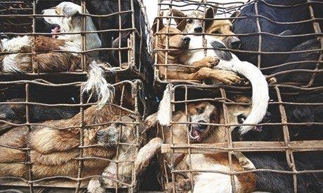 Thịt chó Việt Nam trong mắt người nước ngoài - 2
