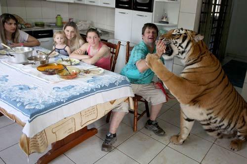 Gia đình sống chung với 7 con hổ dữ - 4