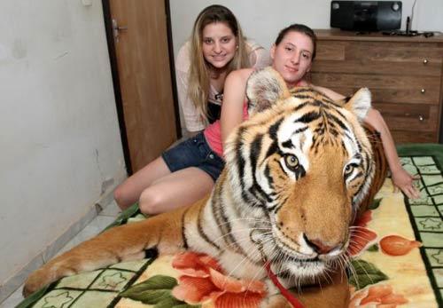 Gia đình sống chung với 7 con hổ dữ - 5