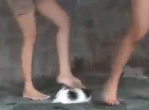 Phẫn nộ clip 3 cô gái giẫm chó con đến chết - 1