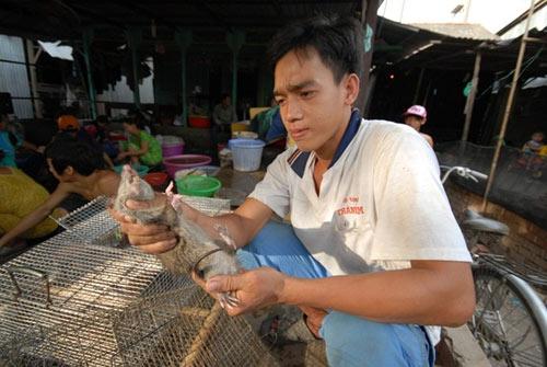Cận cảnh chợ chuột béo mầm ở miền Tây - 8