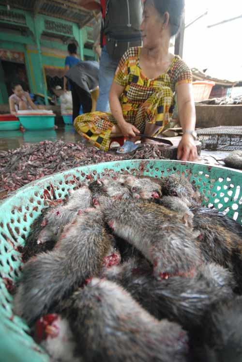 Cận cảnh chợ chuột béo mầm ở miền Tây - 12