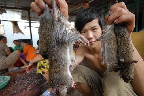 Cận cảnh chợ chuột béo mầm ở miền Tây - 6