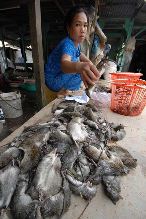Cận cảnh chợ chuột béo mầm ở miền Tây - 7