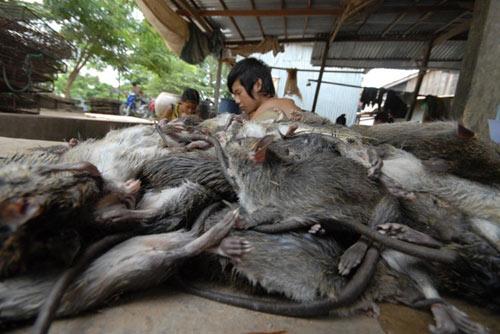 Cận cảnh chợ chuột béo mầm ở miền Tây - 9