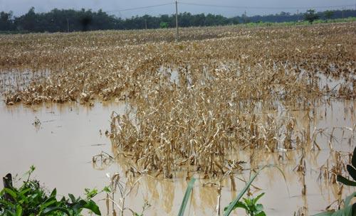 Quảng Nam: Lũ thủy điện bủa vây người dân - 10