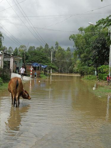 Quảng Nam: Lũ thủy điện bủa vây người dân - 9