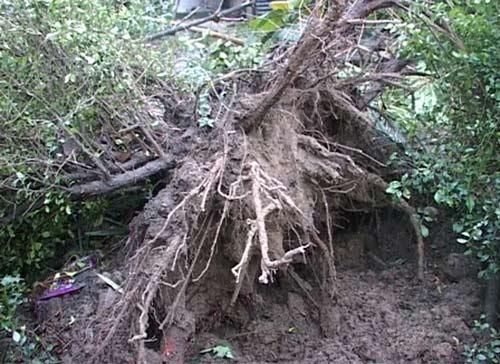 Sau bão, lốc xoáy lại tàn phá miền Trung - 2