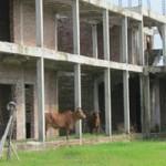 Giáo dục - du học - Hà Nội: Kiểm tra các trường học bỏ hoang