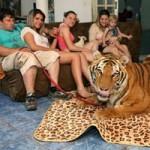 Phi thường - kỳ quặc - Gia đình sống chung với 7 con hổ dữ