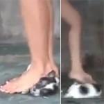 Bạn trẻ - Cuộc sống - Phẫn nộ clip 3 cô gái giẫm chó con đến chết