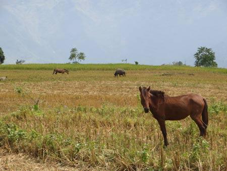 Quyến rũ sắc vàng mùa gặt ở Lùng Khấu Nhin - 10